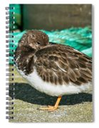 Sleepy Turnstone At Padstow Harbour Spiral Notebook