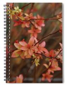 Spirea 1280 Spiral Notebook