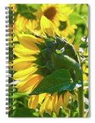 Sunflower 7249a Spiral Notebook