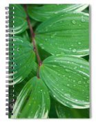 Tears Of Solomons Spiral Notebook