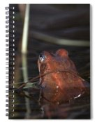 The Common Frog 2 Spiral Notebook