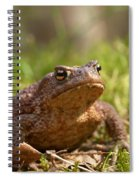 The Common Toad 3 Spiral Notebook