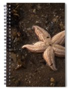 Vanishing Star Spiral Notebook