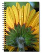Water Drops On Gerbera Daisy Spiral Notebook