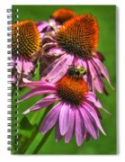 01 Bee And Echinacea Spiral Notebook