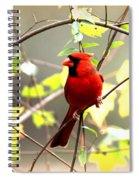0138 - Cardinal Spiral Notebook