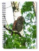 0298-001 - Barred Owl Spiral Notebook