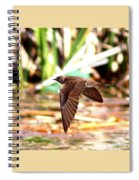 0518 - Northern Rough-winged Swallow Spiral Notebook