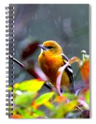 0651 - Baltimore Oriole Spiral Notebook