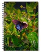 080706-6-a Spiral Notebook