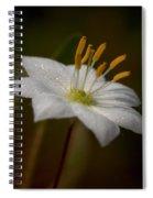 Arctic Starflower Spiral Notebook