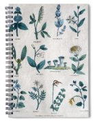 Lithography Of Common Flowers  Spiral Notebook