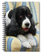 #940 D1031 Farmer Browns Springer Spaniel Spiral Notebook