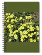 A Cluster Of Sunshine Spiral Notebook