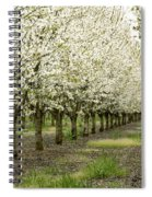 A Flowering Cherry Orchard Spiral Notebook