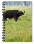 African Buffalo Spiral Notebook