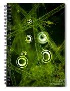 Algae Spirogyra Sp., Lm Spiral Notebook