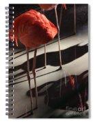 All Legs Spiral Notebook