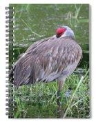 Sweet Sandhill Slumber Spiral Notebook