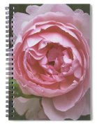 Alnwick Rose 1830 Spiral Notebook