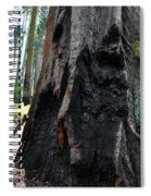 Alta Vista Giant Sequoia Spiral Notebook