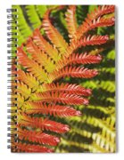 Amaumau Fern Frond Spiral Notebook