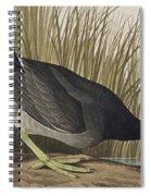 American Coot Spiral Notebook