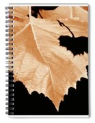 American Sycamore Leaf And Leaf Shadow Spiral Notebook