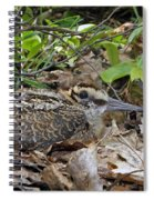 American Woodcock Chick Spiral Notebook