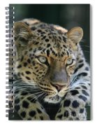 Amur Leopard #2 Spiral Notebook