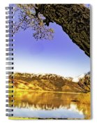 Ancient Trees Spiral Notebook