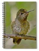 Anna's Perched Spiral Notebook