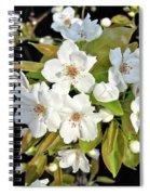 Apple Blossoms 0936 Spiral Notebook
