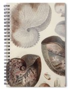 Aquatic Animals - Sea - Shells - Composition - Alien - Wall Art  - Interior Decoration  Spiral Notebook