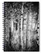 Aspen Trees In Black And White Spiral Notebook