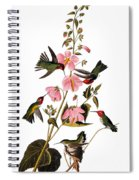 Audubon: Hummingbird Spiral Notebook