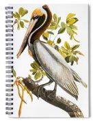 Audubon: Pelican Spiral Notebook
