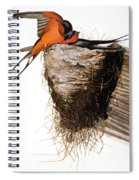 Audubon: Swallow Spiral Notebook