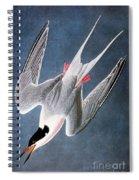 Audubon: Tern Spiral Notebook