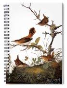 Audubon: Wren Spiral Notebook