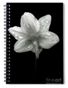 Backside Daffodil Dew Spiral Notebook