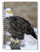 Bald Eagle Spiral Notebook