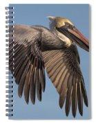 Beautiful Brown Pelican Spiral Notebook