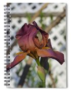 Beautiful Iris Spiral Notebook