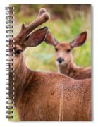 Beautiful Mule Deer Herd Spiral Notebook