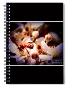 Bee On Apple Blossoms Spiral Notebook