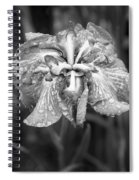 Bellevue Botanical Garden Iris 6402 Spiral Notebook