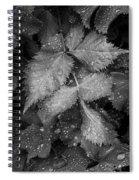 Bellevue Botanical Garden Leaves 6395 Spiral Notebook