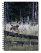 Big Buck Spiral Notebook