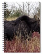 Big Mama Moose Spiral Notebook